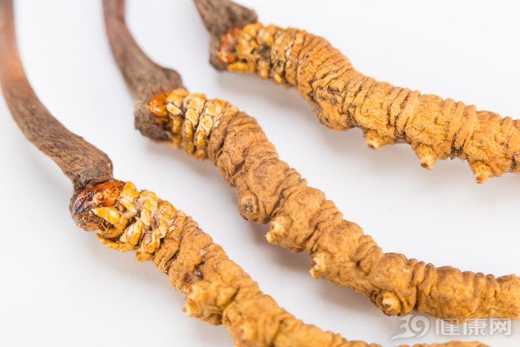 冬蟲夏草大補,要怎麼吃?這4種吃法,簡單又養生