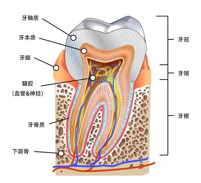 牙齒太黃不敢張嘴?過來選一個牙齒美白方法再走吧