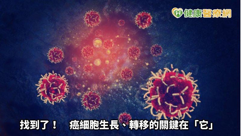 找到了! 癌細胞生長、轉移的關鍵在「它」_頭型